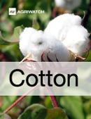 Fundamental  supply and demand analysis and forecast outlook of Cotton markets