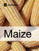 Fundamental  supply and demand analysis and forecast outlook of Maize (Corn) markets