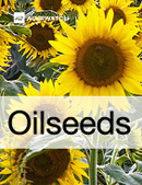 Fundamental  supply and demand analysis and forecast outlook of Rapeseed (Mustard Seed) markets