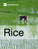 Fundamental  supply and demand analysis and forecast outlook of Rice markets
