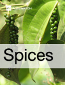 Fundamental  supply and demand analysis and forecast outlook of Black Pepper markets